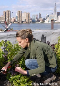 """Tending to Skyline Crops"" - Eagle Street Rooftop Farm, NY 