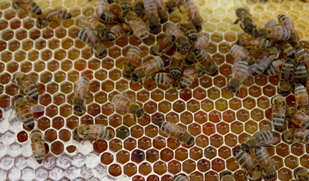 07_Urban-Apiaries_byLMandel_cropped
